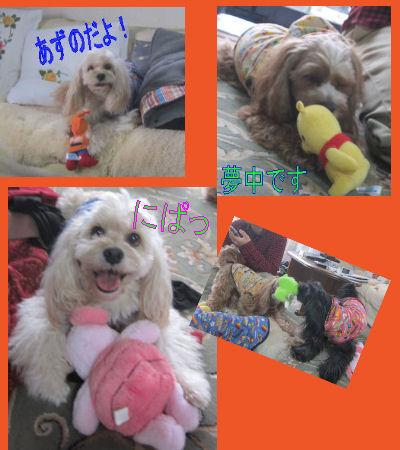 2012.2.26おもちゃ~!