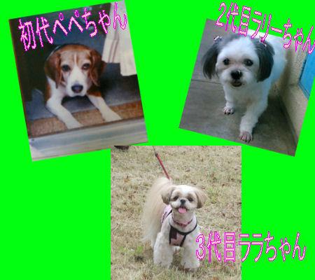 2012.3.30実家歴代
