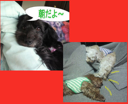 2012.3.31朝寝坊