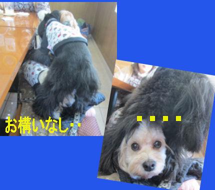 2012.4.5お構いなし