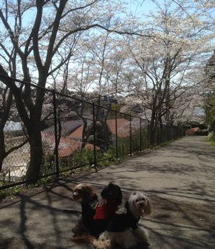 2012.4.8散歩