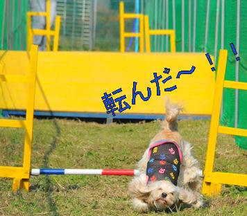 2011.10.10ころんだ!!!