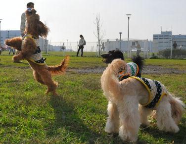 2011.11.13くるみジャンプ1