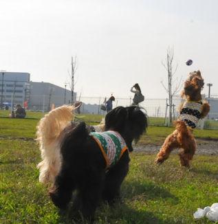 2011.11.13くるみジャンプ3