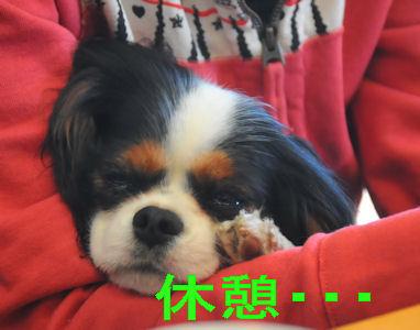 2012.1.9しょぼん