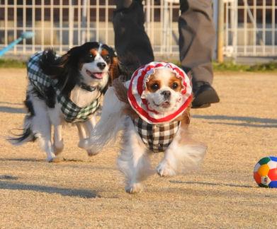 2012.1.9えりはぴさん1