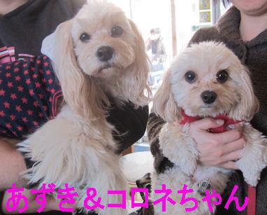 2012.1.28あずき&ころね