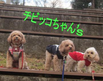 2012.1.28ちびこちゃんズ