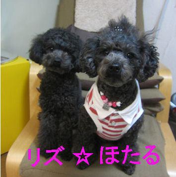 2012.3.20リズほた