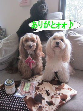 2012.3.15くれじゅりちゃんありがとう