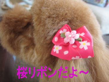 2012.4.12さくらりぼん