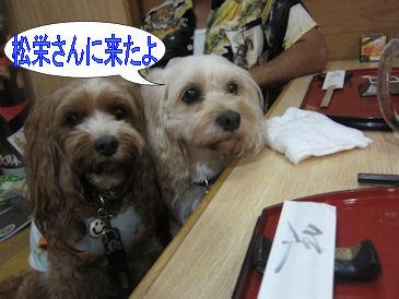 2011.8.21松栄さんい来たよ
