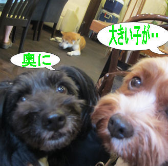 2011.8.28奥に・・・