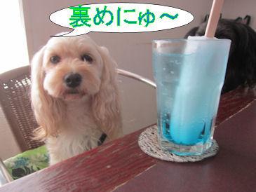 2011.8.29裏めにゅー