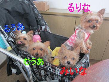 2011.8.29みいなふぁみり~