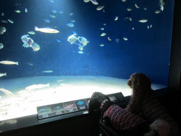 2011.9.4水族館