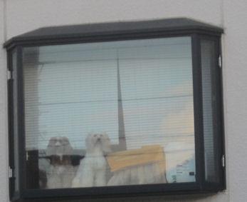 2011.9.5出窓