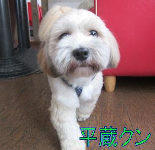 2011.9.12平蔵ちゃん