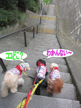 2011.9.23冒険