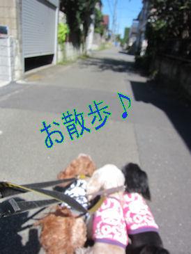 2011.9.24散歩