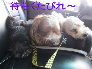 2011.9.24まちくたびれ~