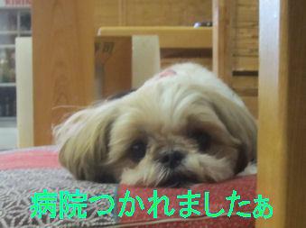 2011.9.24ララ疲れた―