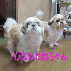 2011.10.1ひなねねちゃん