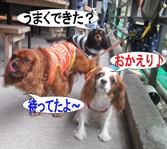2011.10.2おかえり~