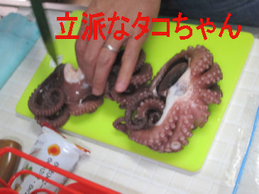 2011.10.16たこちゃん