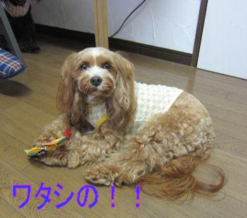 2011.10.22くるみの~!