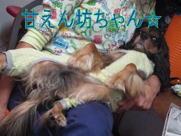 2011.10.22坊ちゃん