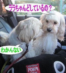 2011.10.29どして?