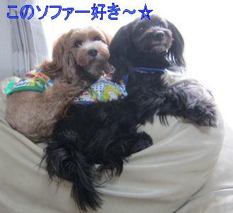 2011.10.30ココ好き~