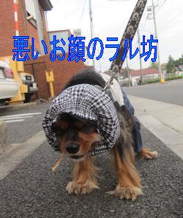 2011.11.3ちょい悪