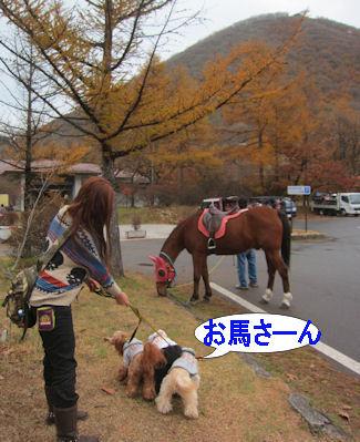 2011.11.6 お馬さん