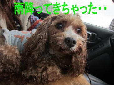 2011.11.6びっちょり