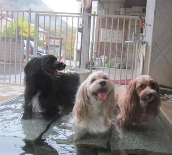 2011.11.6温泉