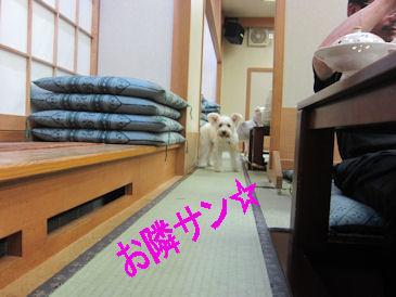 2011.11.6お隣ワンコ