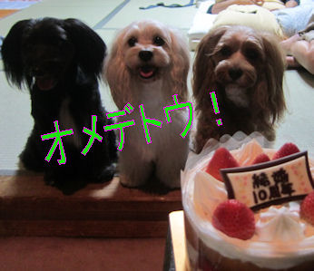 2011.11.6 おめでとう