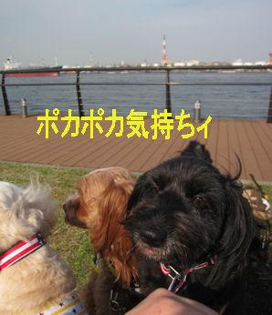 2011.11.13ぽかぽか