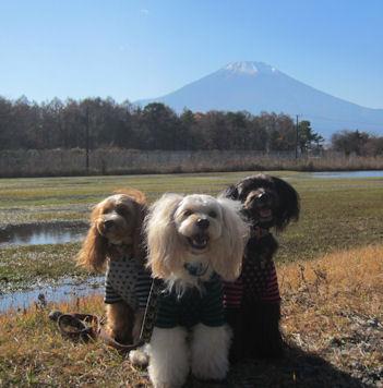 2011.11.20あずーセンター