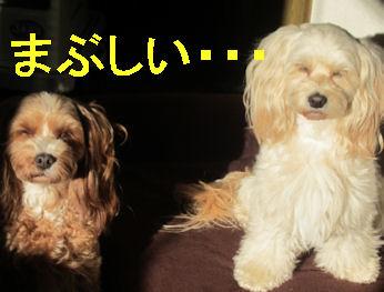 2011.12.4まぶしい