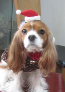 2011.12.25愛羽サンタ