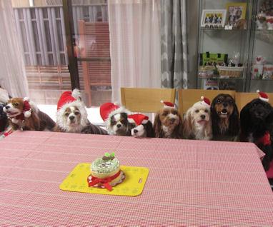 2011.12.25ケーキとみんな