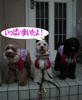 2011.9.23帰宅