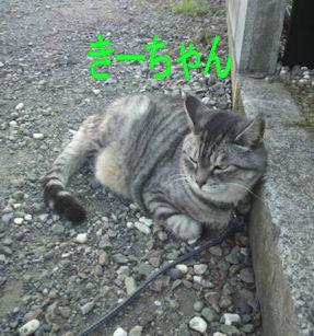 2011.9.29きーちゃん