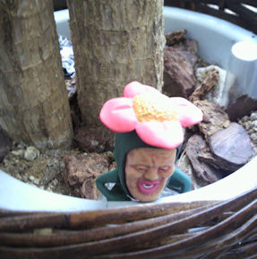2011.10.1植木