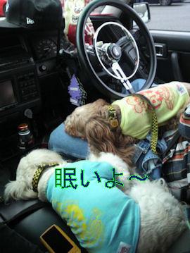 2011.10.23眠い~