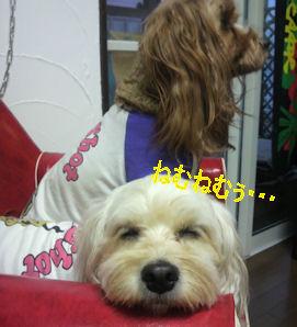 2011.11.3眠いな~