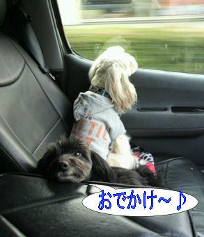 2012.1.15おでかけ~